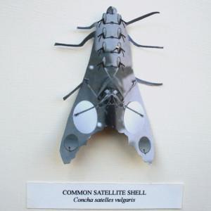 Common Satellite Shell